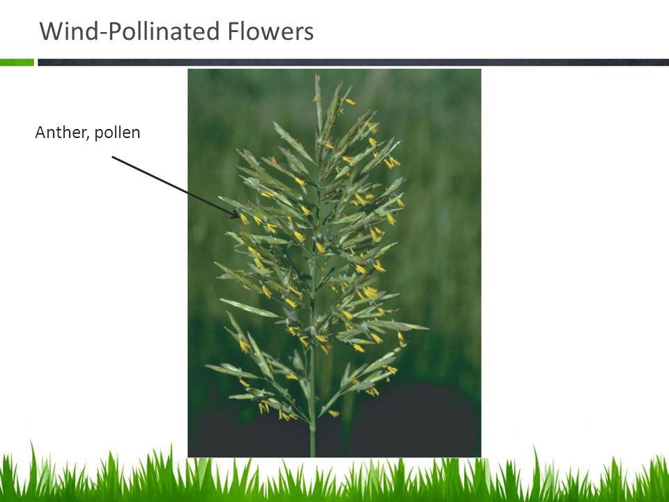Wind-Pollinated Flowers
