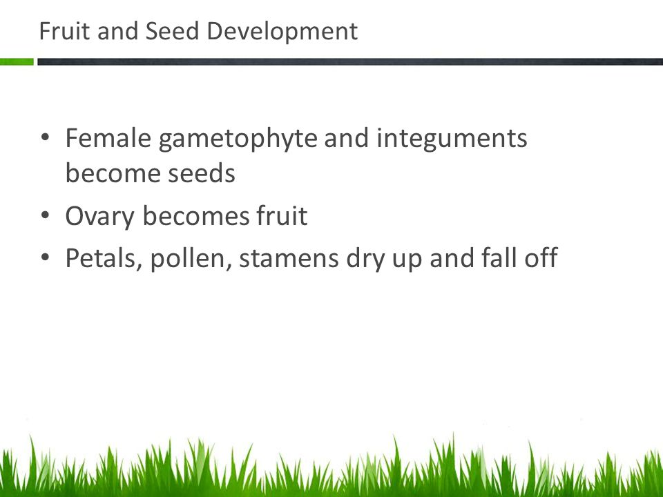 Fruit and Seed Development