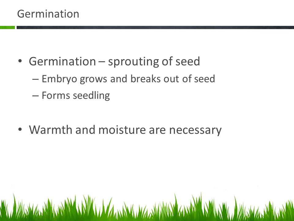 Germination – sprouting of seed