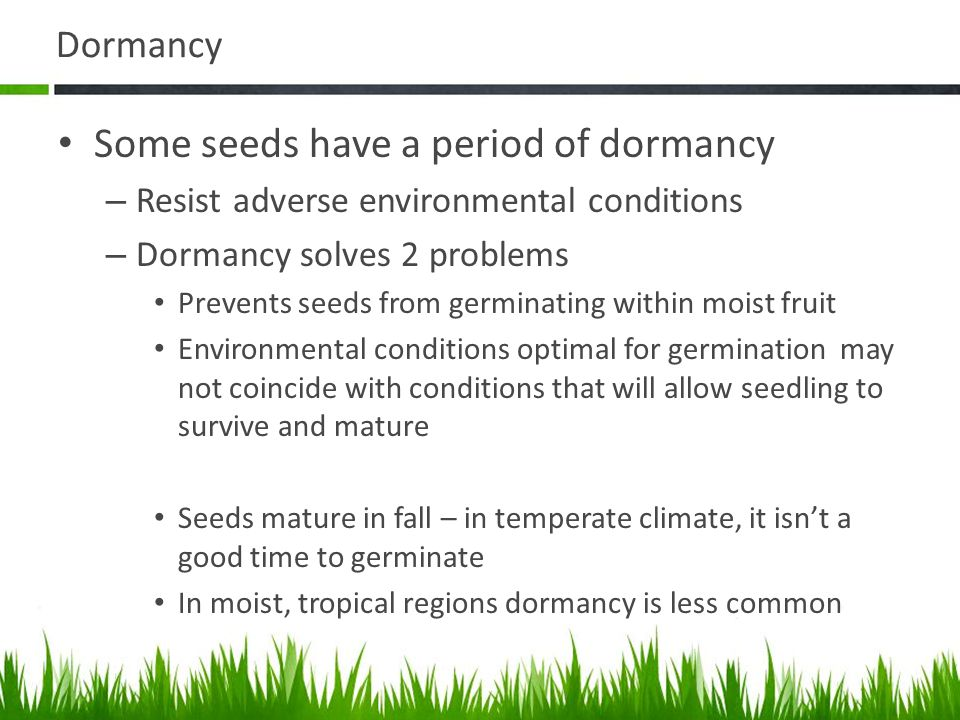Some seeds have a period of dormancy