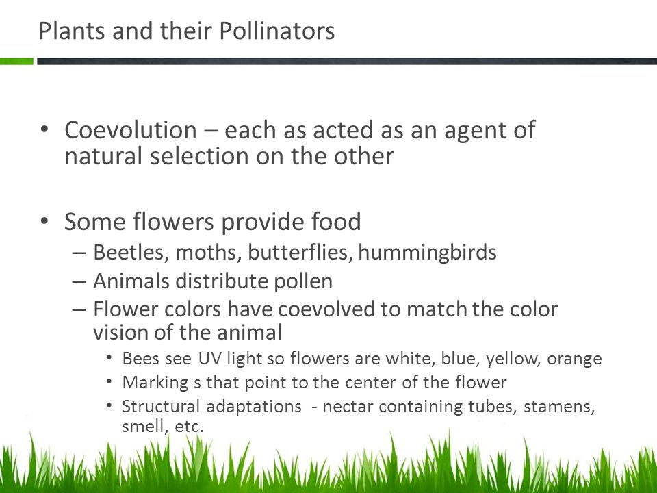 Plants and their Pollinators