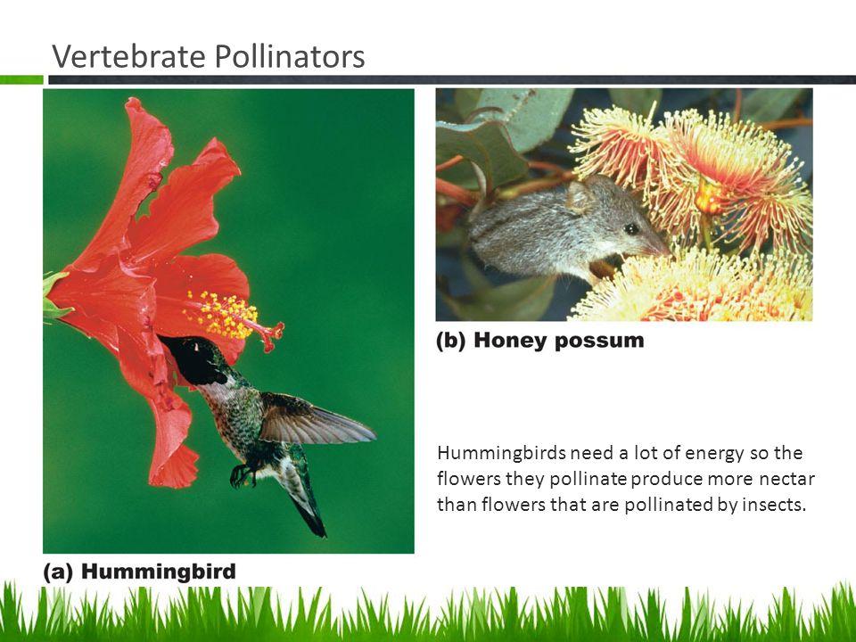 Vertebrate Pollinators