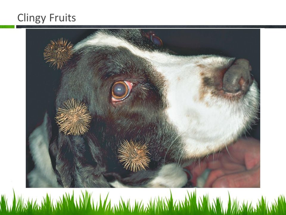 Clingy Fruits