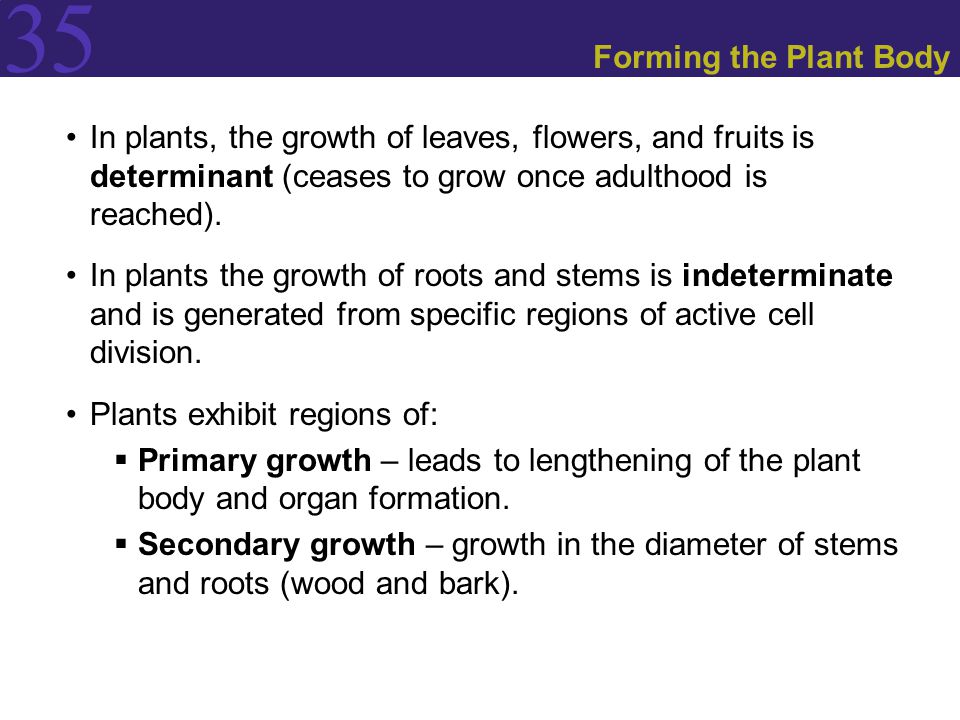 Forming the Plant Body In plants, the growth of leaves, flowers, and fruits is determinant (ceases to grow once adulthood is reached).