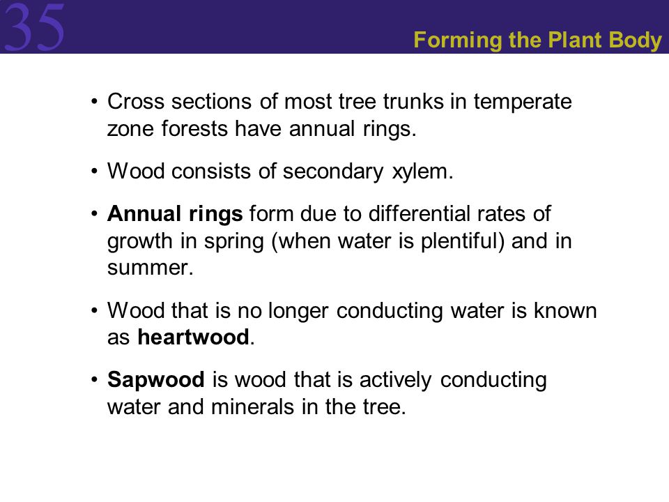 Forming the Plant Body Cross sections of most tree trunks in temperate zone forests have annual rings.