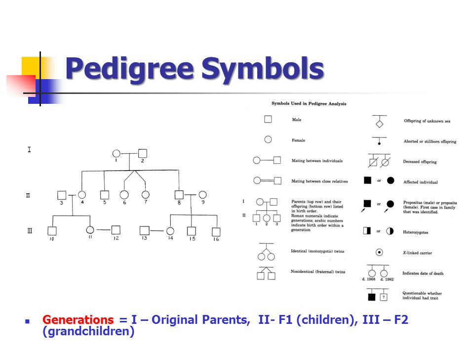 Pedigree Symbols Generations = I – Original Parents, II- F1 (children), III – F2 (grandchildren)