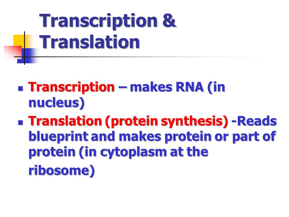 Transcription & Translation