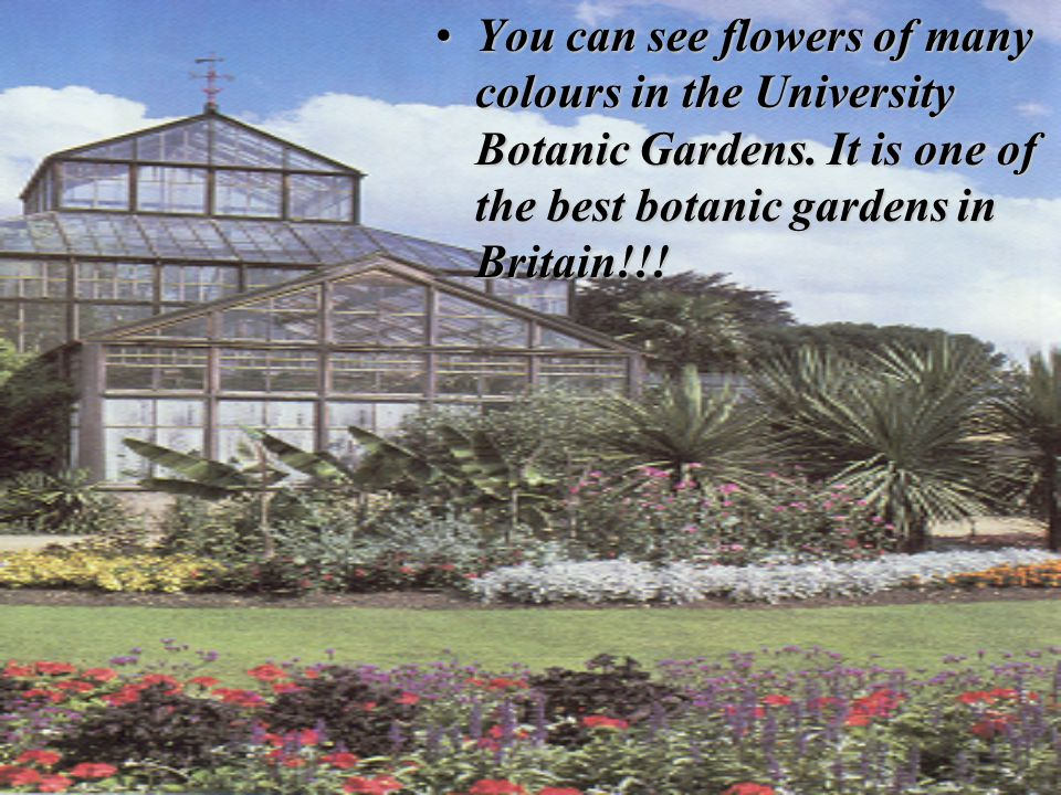 You can see flowers of many colours in the University Botanic Gardens