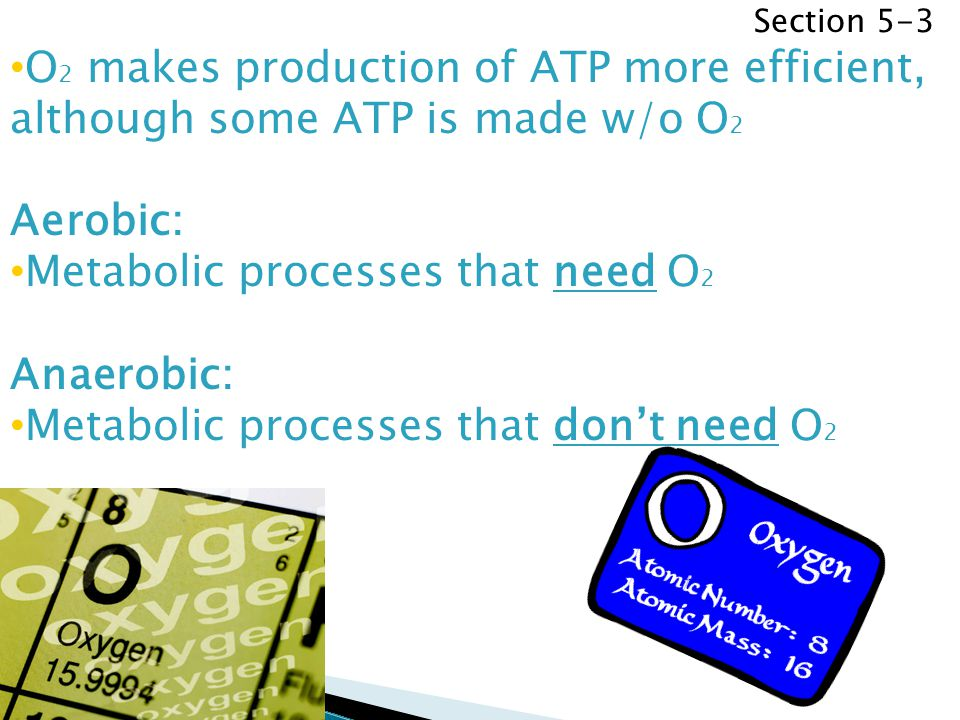 Metabolic processes that need O2 Anaerobic:
