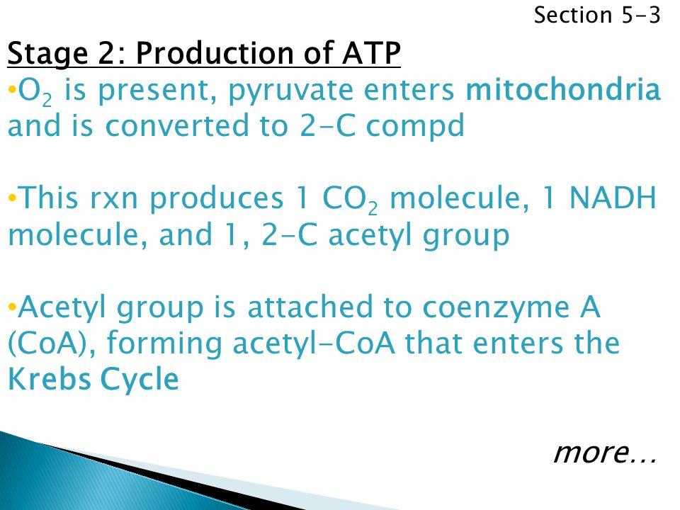 Stage 2: Production of ATP