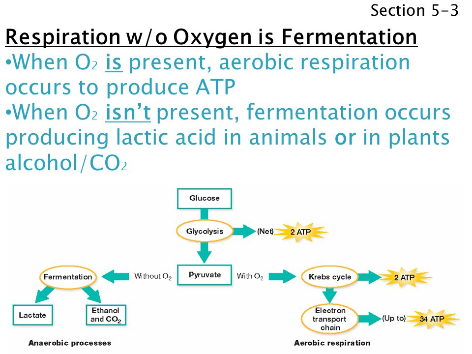 Respiration w/o Oxygen is Fermentation