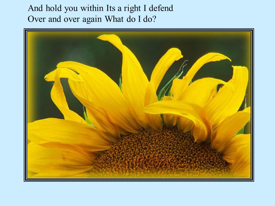 And hold you within Its a right I defend Over and over again What do I do