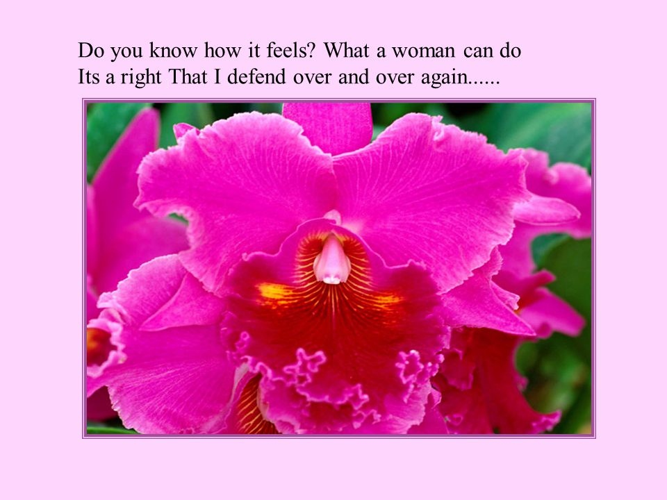 Do you know how it feels What a woman can do Its a right That I defend over and over again......