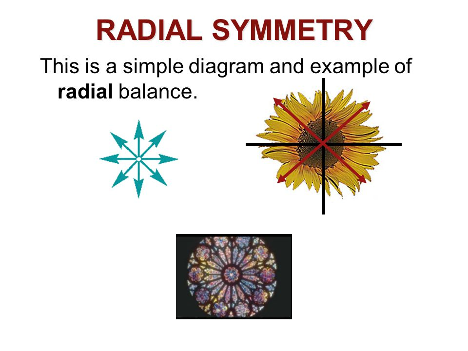 RADIAL SYMMETRY This is a simple diagram and example of radial balance.