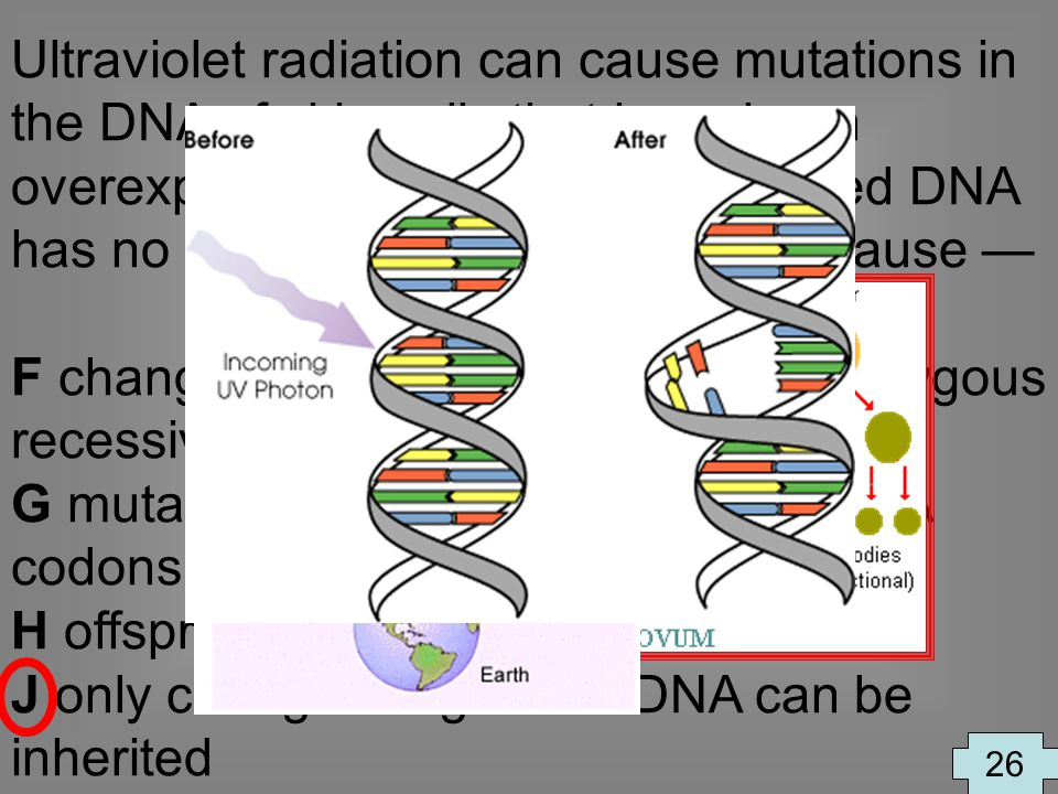 Ultraviolet radiation can cause mutations in