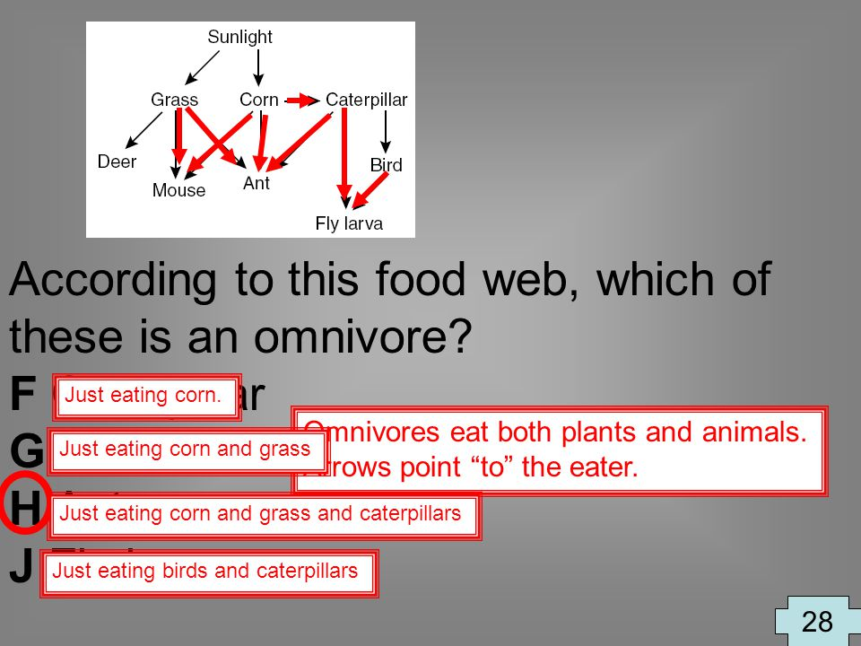 According to this food web, which of these is an omnivore