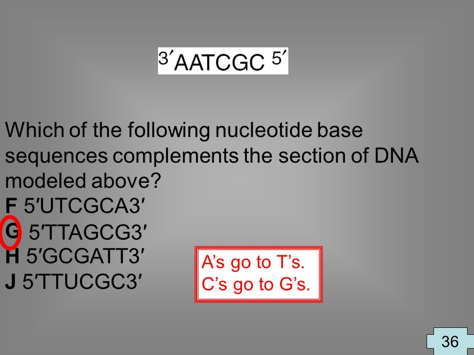 Which of the following nucleotide base