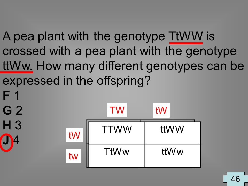A pea plant with the genotype TtWW is