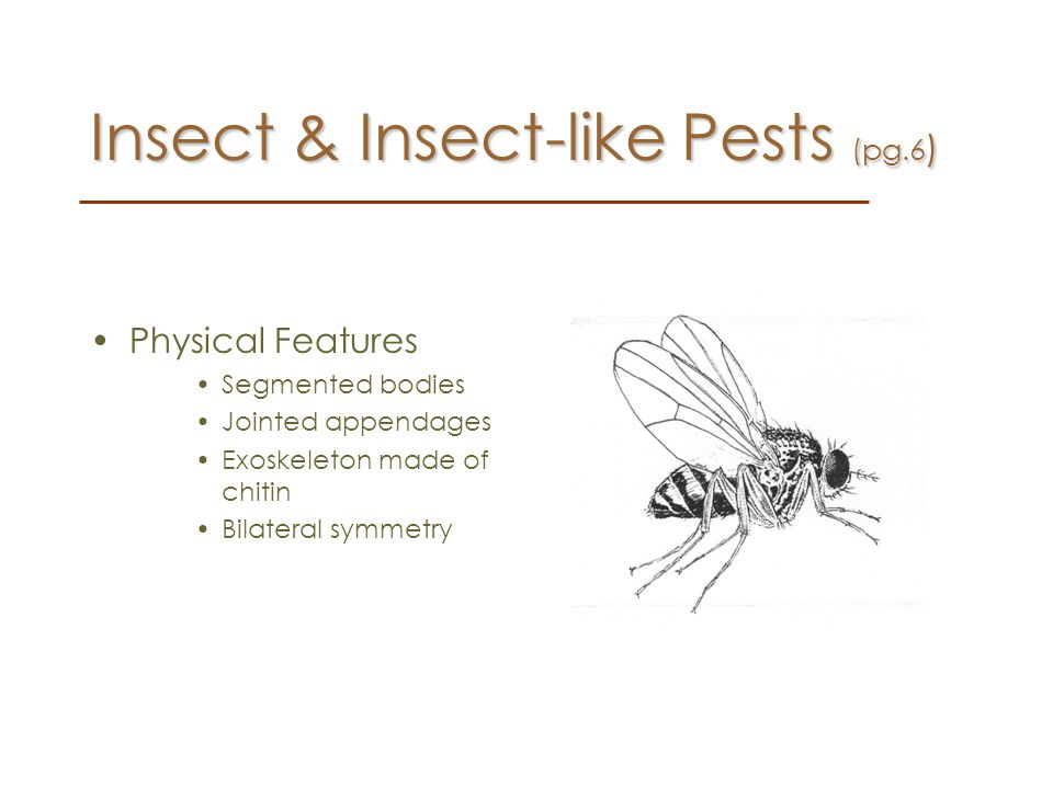 Insect & Insect-like Pests (pg.6)
