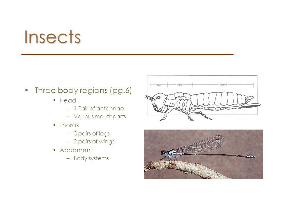 Insects Three body regions (pg.6) Head Thorax Abdomen