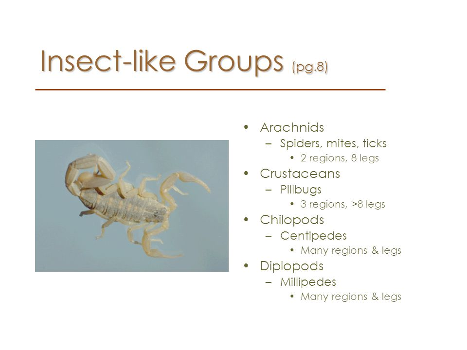 Insect-like Groups (pg.8)
