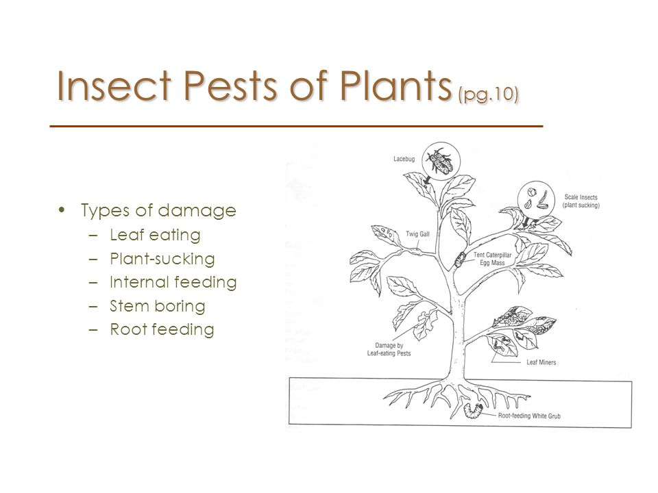 Insect Pests of Plants (pg.10)