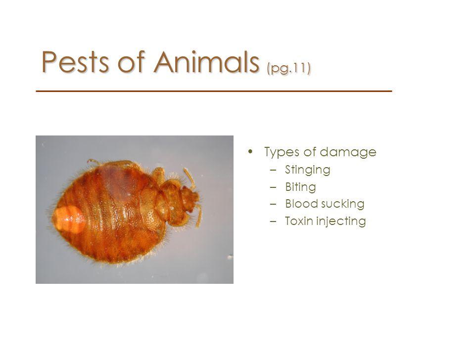 Pests of Animals (pg.11) Types of damage Stinging Biting Blood sucking