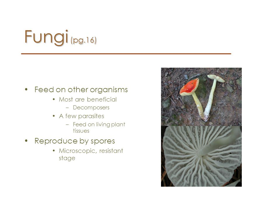 Fungi (pg.16) Feed on other organisms Reproduce by spores