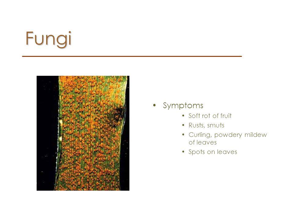 Fungi Symptoms Soft rot of fruit Rusts, smuts
