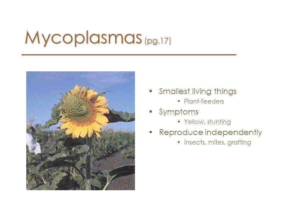 Mycoplasmas (pg.17) Smallest living things Symptoms