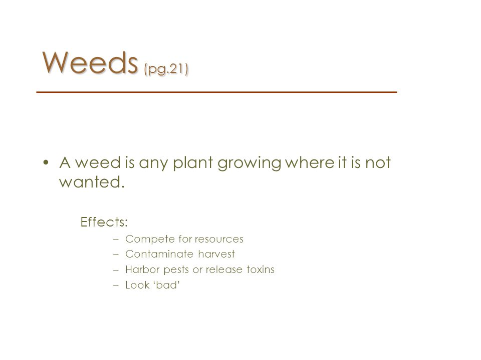 Weeds (pg.21) A weed is any plant growing where it is not wanted.