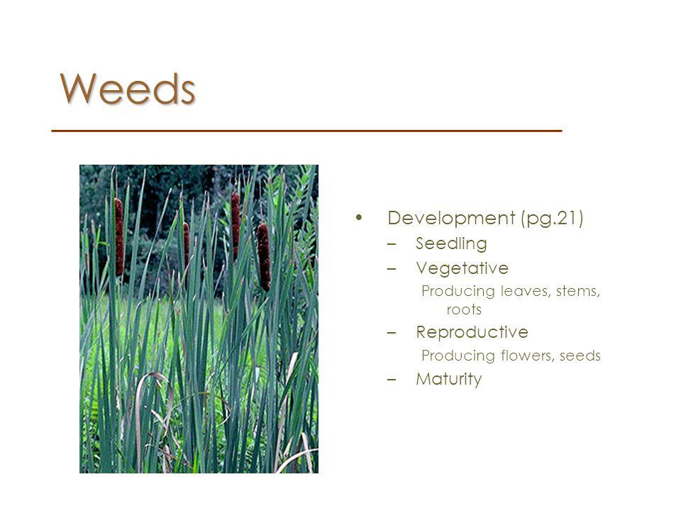 Weeds Development (pg.21) Seedling Vegetative Reproductive Maturity