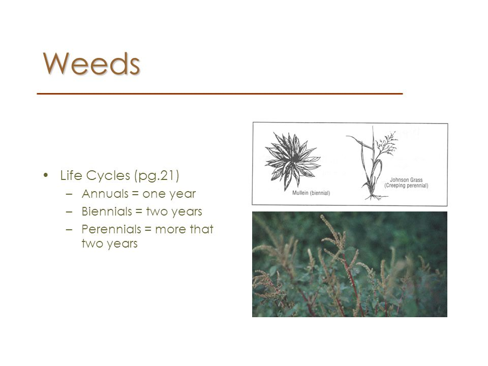 Weeds Life Cycles (pg.21) Annuals = one year Biennials = two years