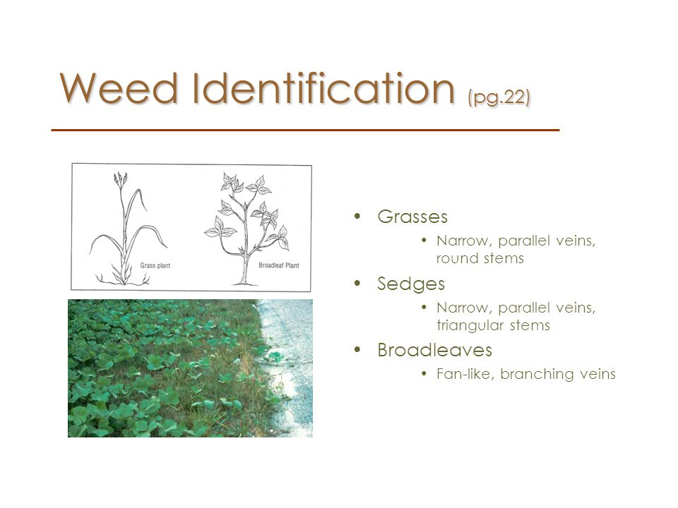 Weed Identification (pg.22)