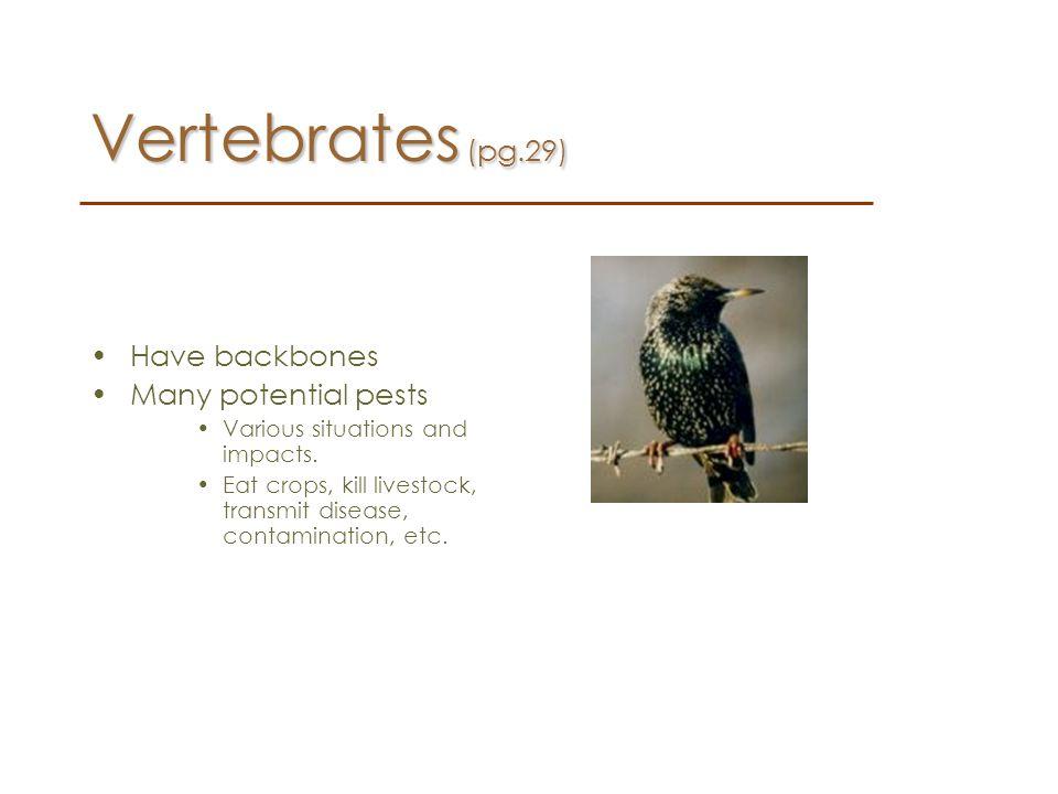 Vertebrates (pg.29) Have backbones Many potential pests