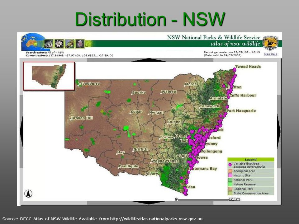 Distribution - NSW Source: DECC Atlas of NSW Wildlife Available from http://wildlifeatlas.nationalparks.nsw.gov.au.