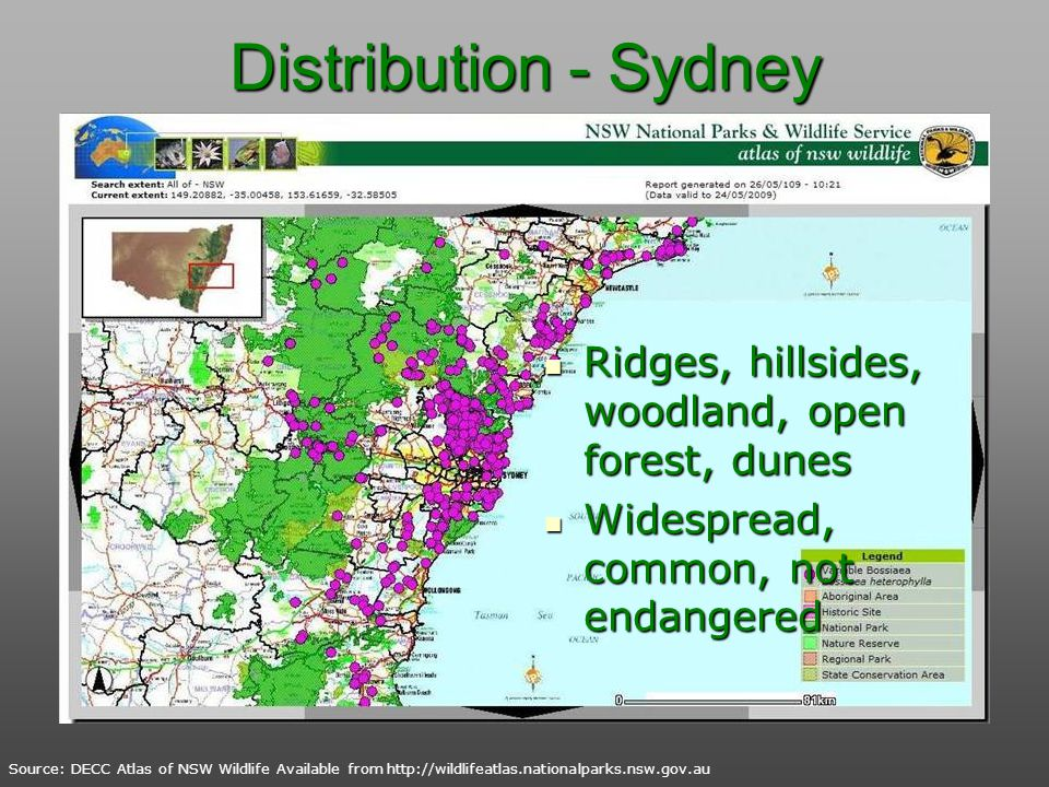 Distribution - Sydney Ridges, hillsides, woodland, open forest, dunes