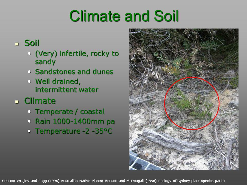 Climate and Soil Soil Climate (Very) infertile, rocky to sandy