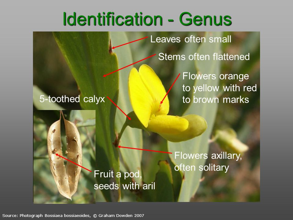 Identification - Genus