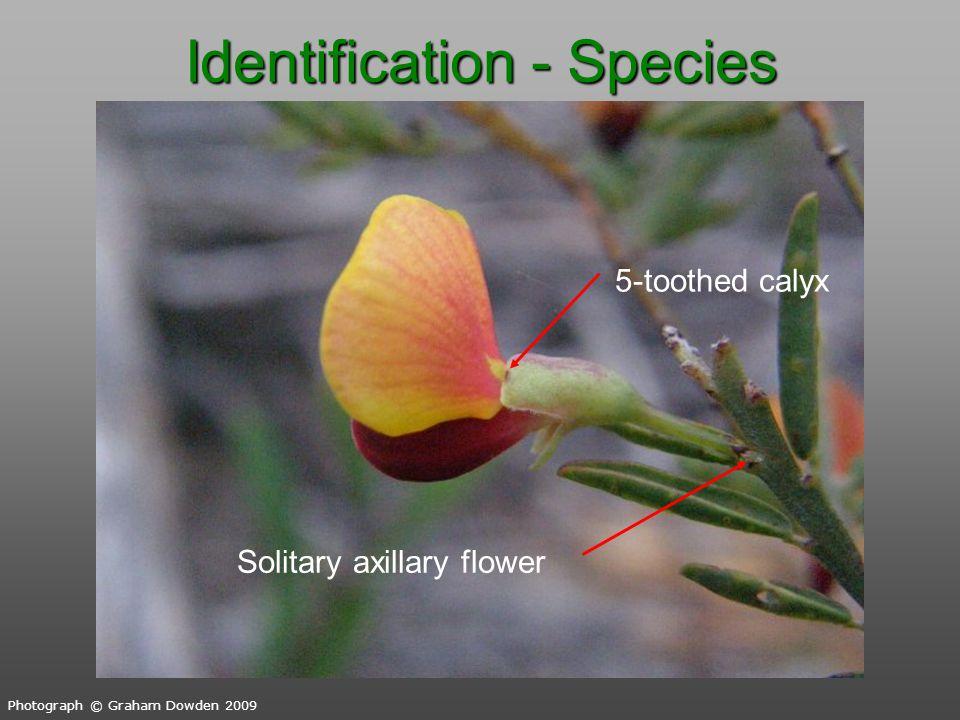 Identification - Species