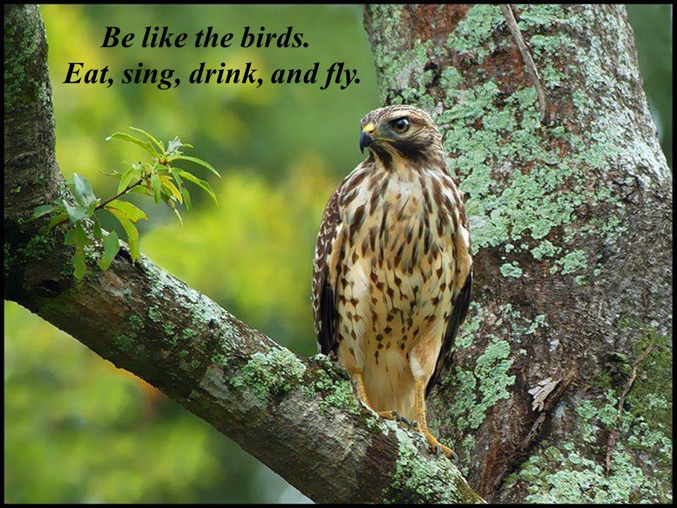 Be like the birds. Eat, sing, drink, and fly.