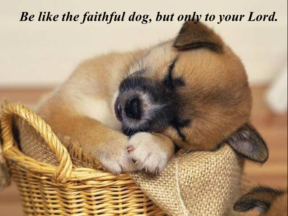 Be like the faithful dog, but only to your Lord.