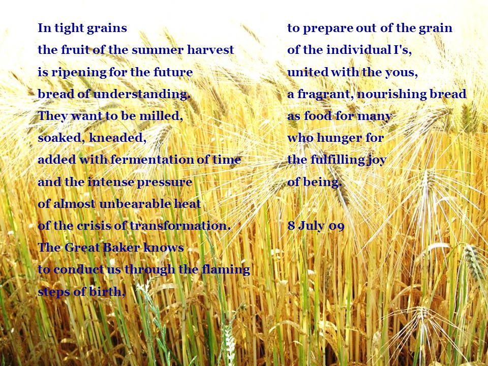 In tight grains the fruit of the summer harvest. is ripening for the future. bread of understanding.