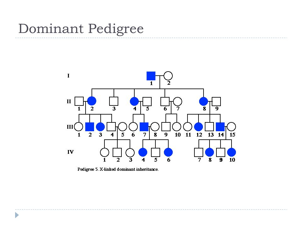 Dominant Pedigree