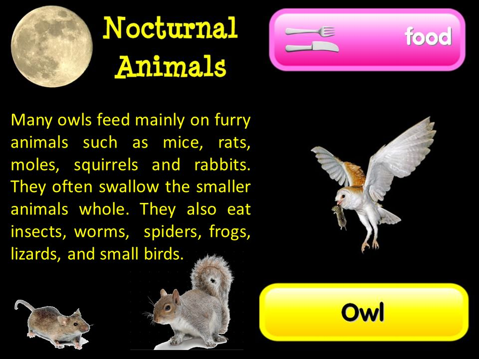 Many owls feed mainly on furry animals such as mice, rats, moles, squirrels and rabbits.