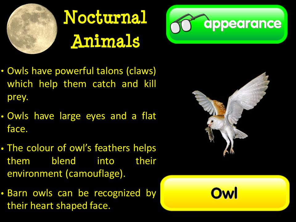 Owls have powerful talons (claws) which help them catch and kill prey.