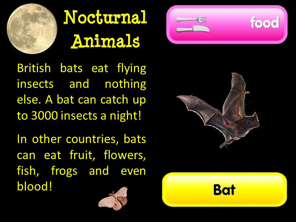 British bats eat flying insects and nothing else