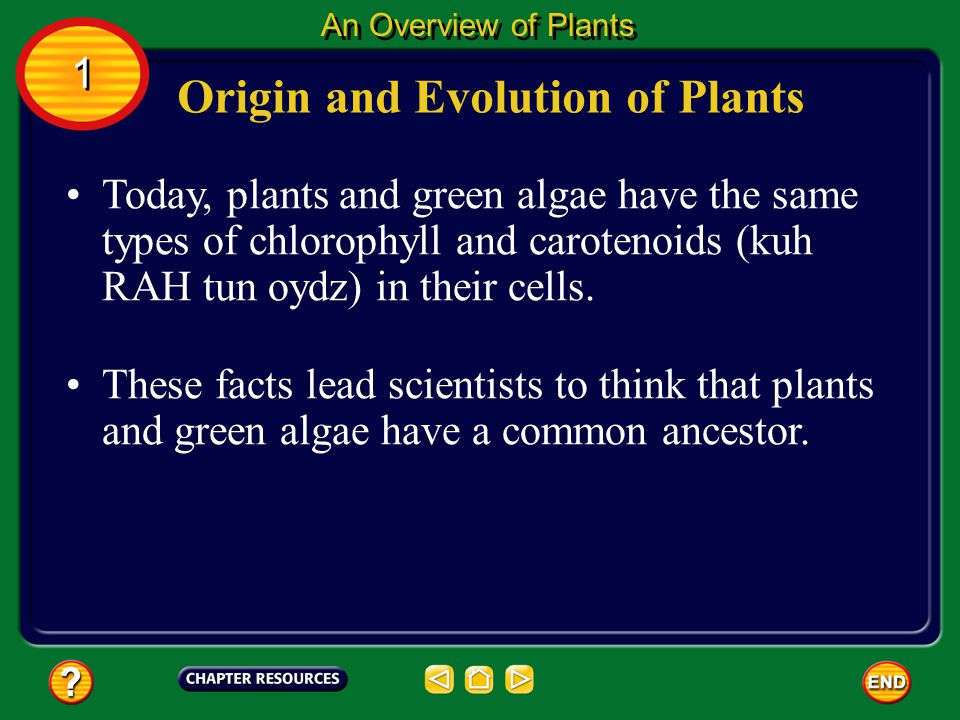 Origin and Evolution of Plants
