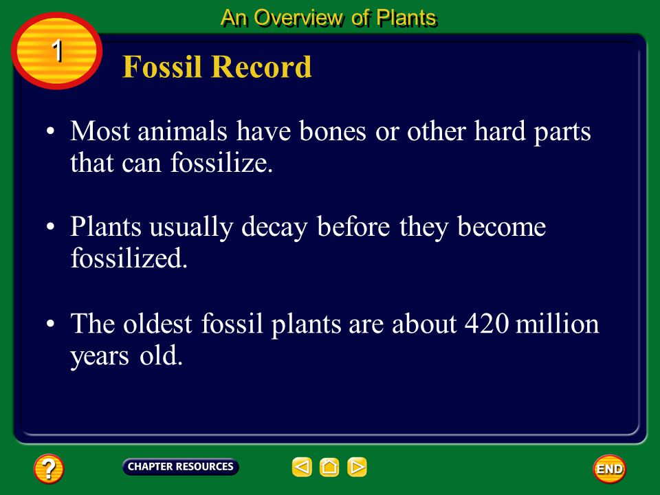 An Overview of Plants 1. Fossil Record. Most animals have bones or other hard parts that can fossilize.