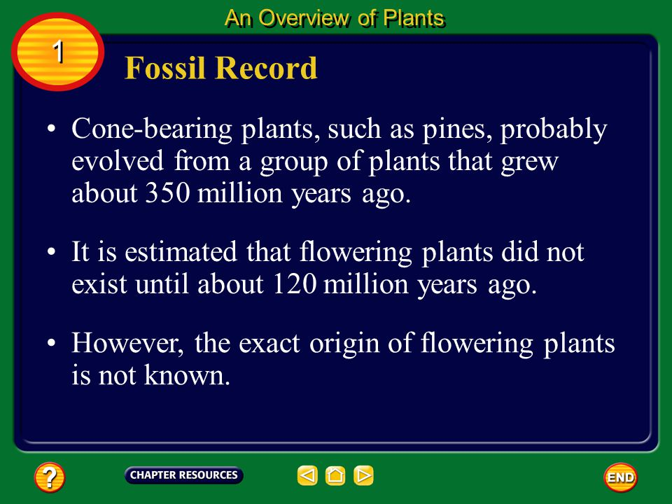An Overview of Plants 1. Fossil Record.